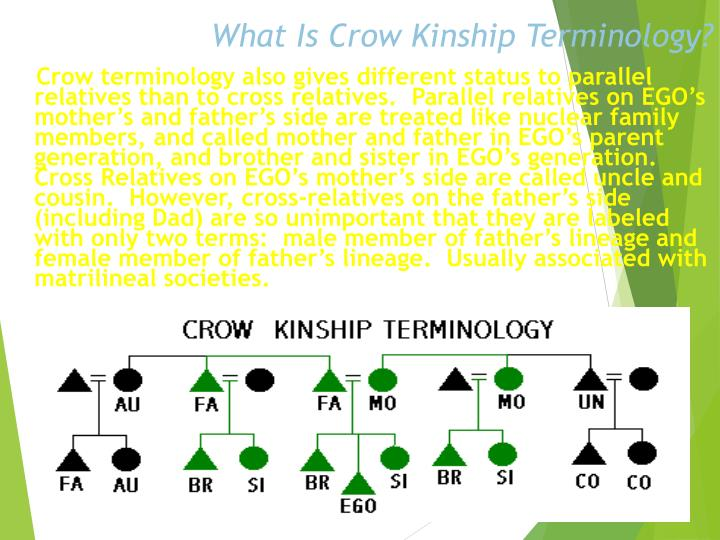 What Is Crow Kinship Terminology?