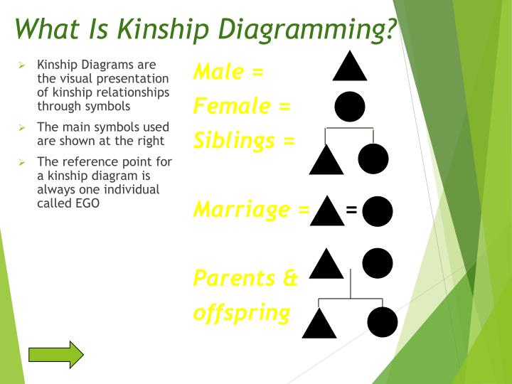 What Is Kinship Diagramming?
