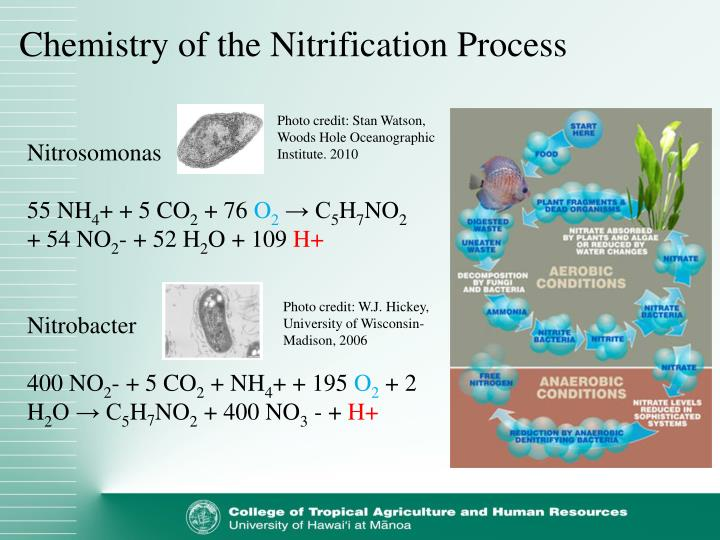 Chemistry of the Nitrification Process