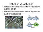 cohesion vs adhesion