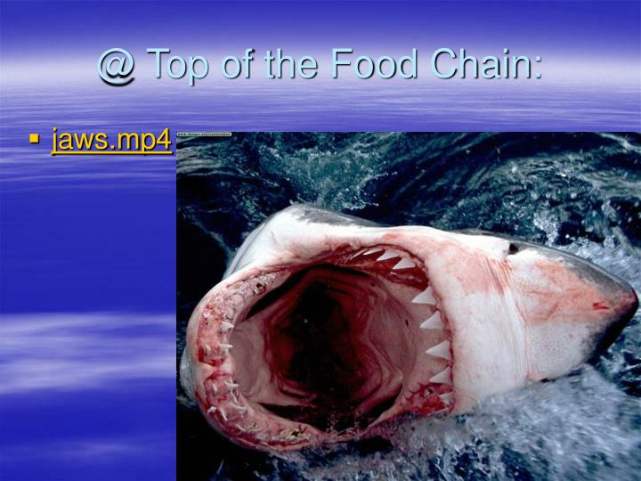 @ Top of the Food Chain: