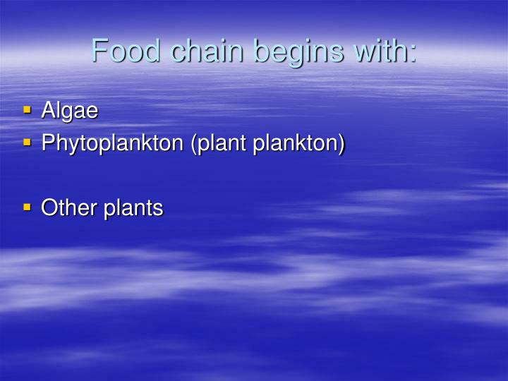 Food chain begins with: