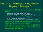 why is a baumannii a persistent hospital pathogen