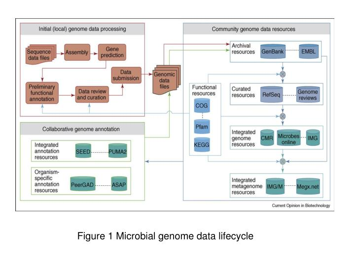 Figure 1 Microbial genome data lifecycle