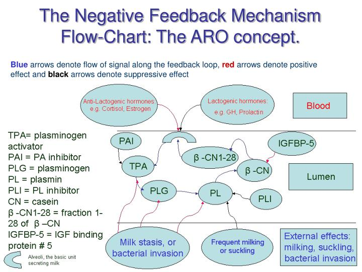 The Negative Feedback Mechanism Flow-Chart: The ARO concept.