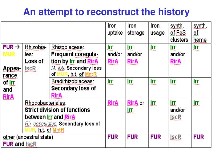 An attempt to reconstruct the history