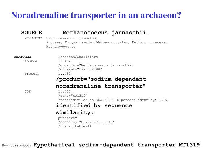 Noradrenaline transporter in an archaeon?