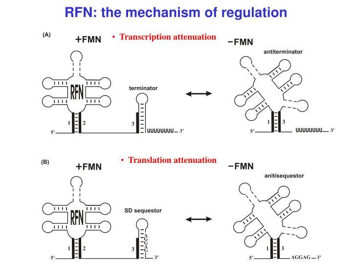 RFN: the mechanism of regulation