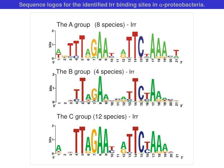 Sequence logos for the identified Irr binding sites in