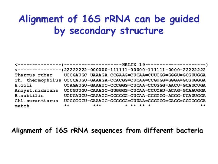 Alignment of 16S rRNA can be guided by secondary structure