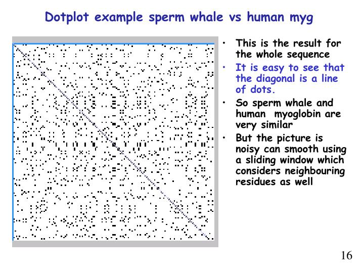Dotplot example sperm whale vs human myg