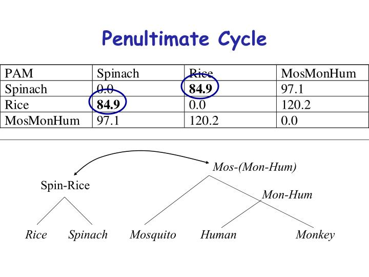 Penultimate Cycle
