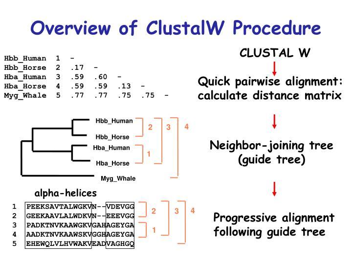 Overview of ClustalW Procedure
