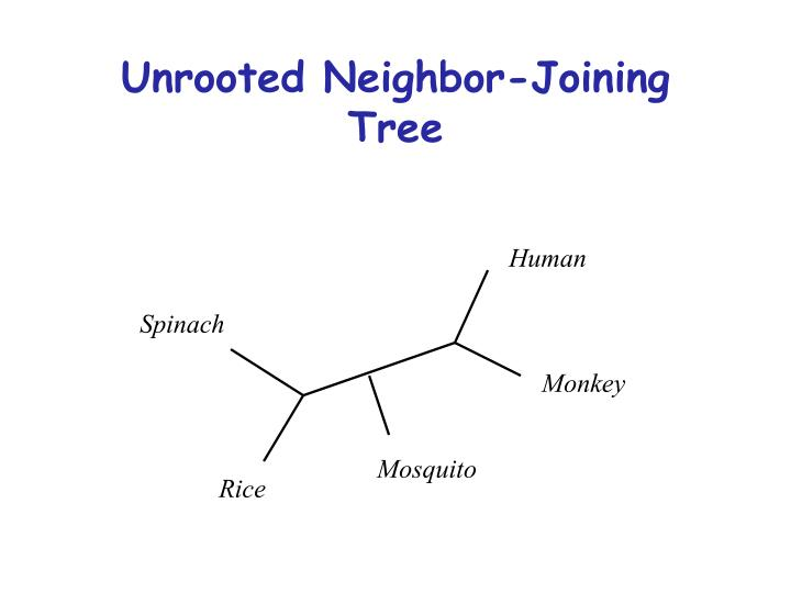 Unrooted Neighbor-Joining Tree