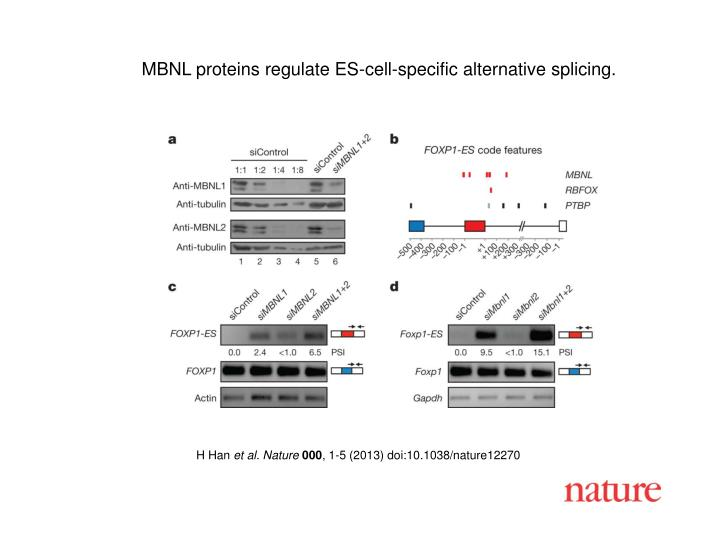MBNL proteins regulate ES-cell-specific alternative splicing.