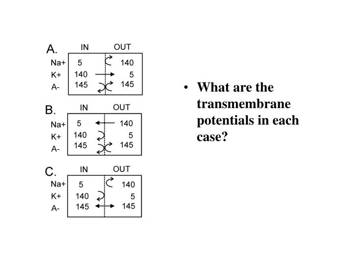 What are the transmembrane potentials in each case?