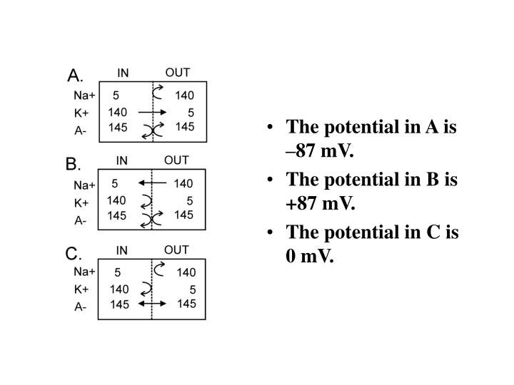 The potential in A is –87 mV.