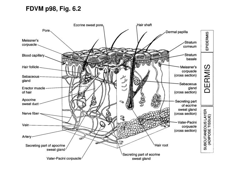 FDVM p98, Fig. 6.2