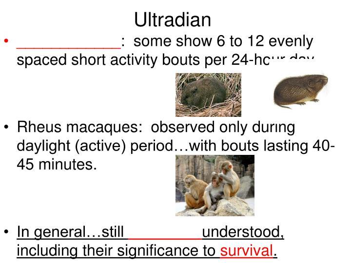 Ultradian