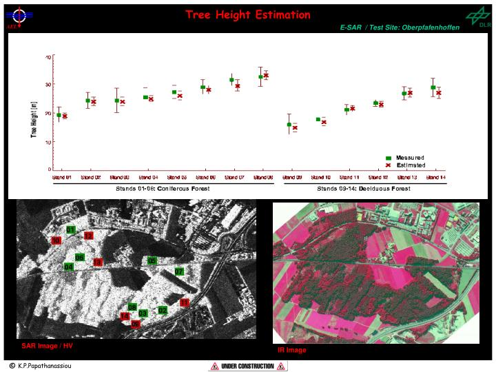 Tree Height Estimation