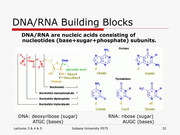 DNA/RNA Building Blocks