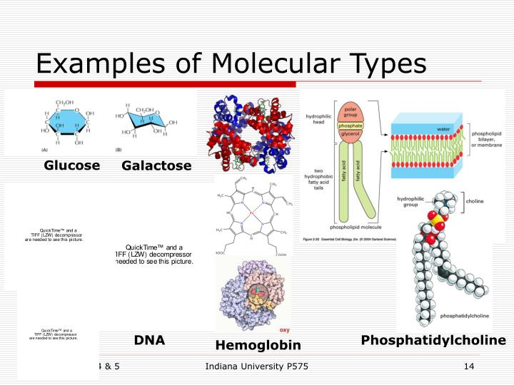 Examples of Molecular Types