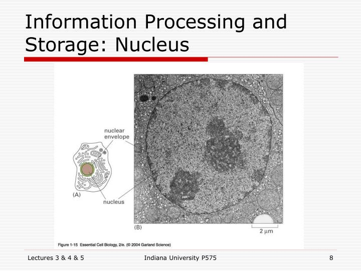 Information Processing and Storage: Nucleus