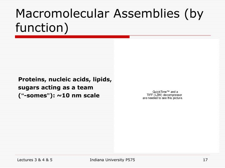 Macromolecular Assemblies (by function)