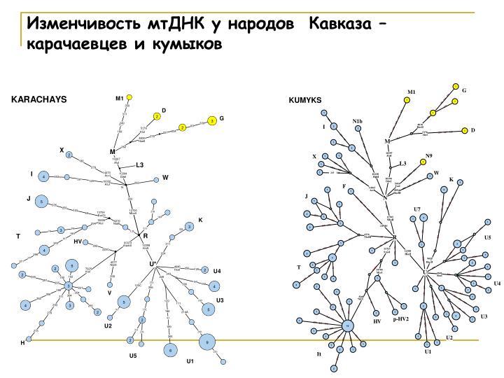 Изменчивость мтДНК у народов  Кавказа –           карачаевцев и кумыков