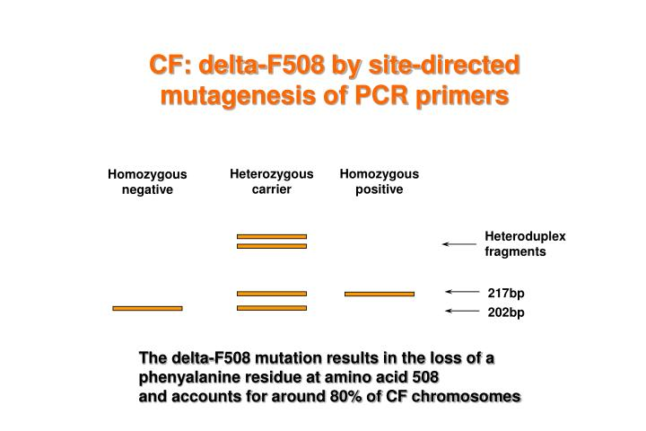 CF: delta-F508 by site-directed mutagenesis of PCR primers