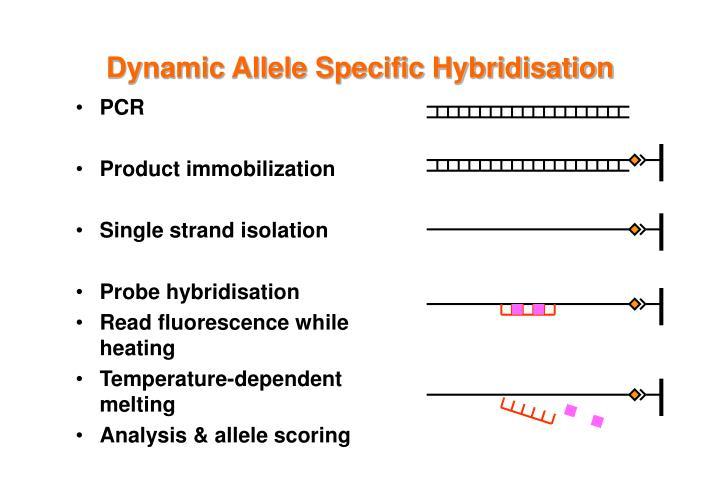 Dynamic Allele Specific Hybridisation