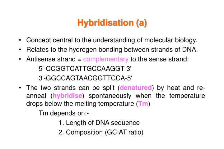 Hybridisation (a)
