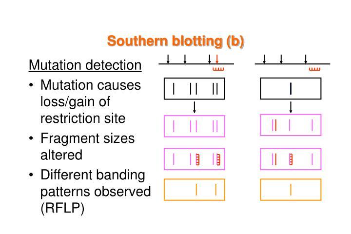 Southern blotting (b)