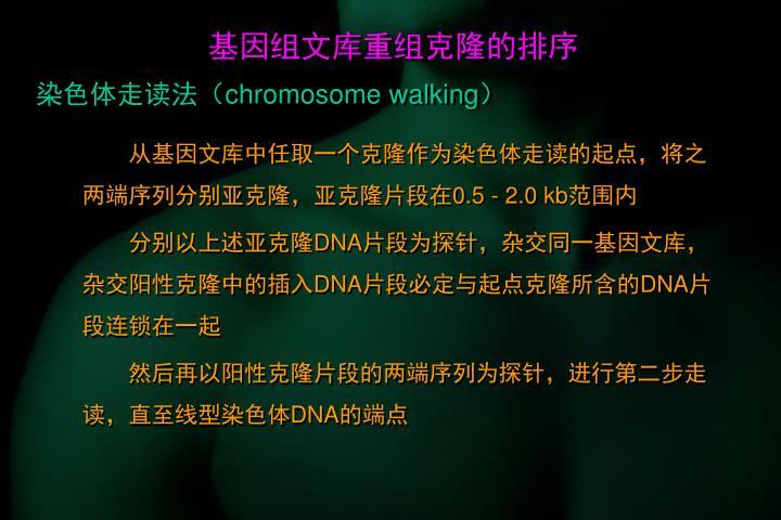 基因组文库重组克隆的排序
