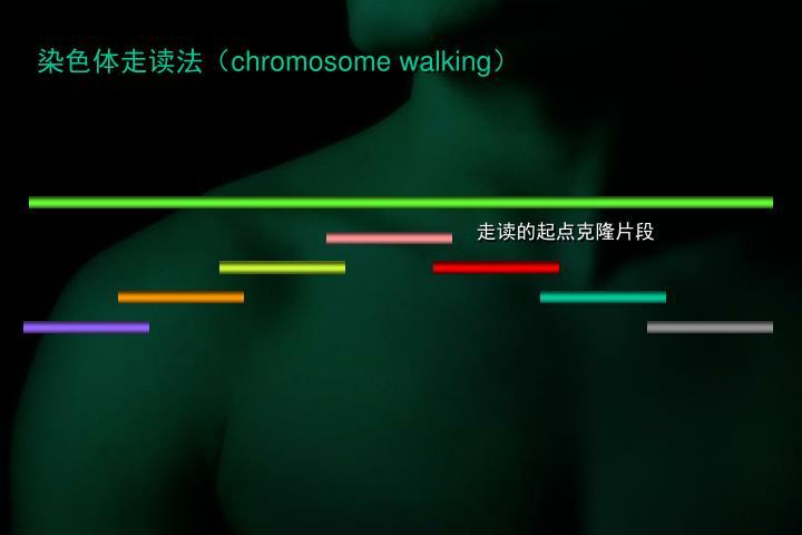 染色体走读法(