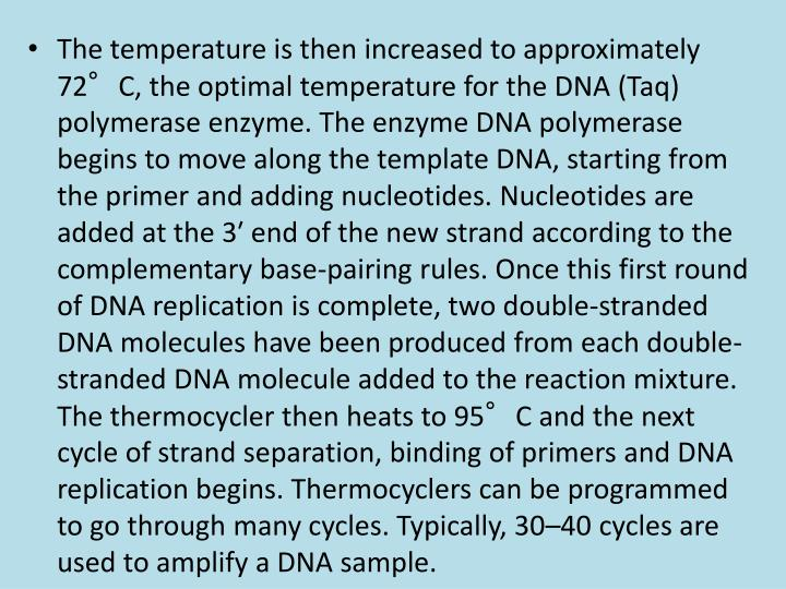 The temperature is then increased to approximately 72°C, the optimal temperature for the DNA (Taq) polymerase enzyme. The enzyme DNA polymerase begins to move along the template DNA, starting from the primer and adding nucleotides. Nucleotides are added at the 3′ end of the new strand according to the complementary base-pairing rules. Once this first round of DNA replication is complete, two double-stranded DNA molecules have been produced from each double-stranded DNA molecule added to the reaction mixture. The thermocycler then heats to 95°C and the next cycle of strand separation, binding of primers and DNA replication begins. Thermocyclers can be programmed to go through many cycles. Typically, 30–40 cycles are used to amplify a DNA sample.