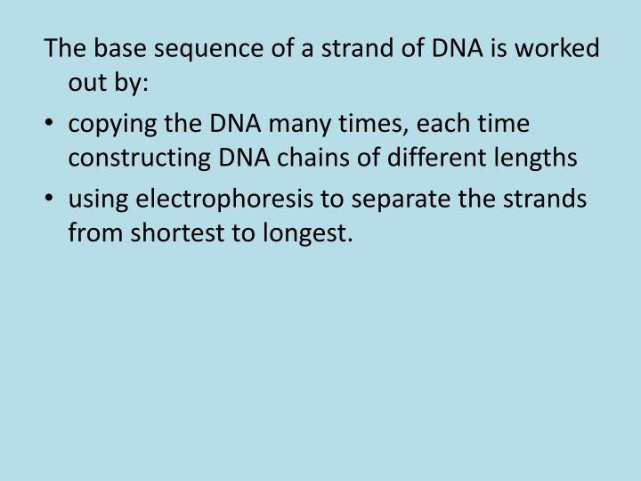 The base sequence of a strand of DNA is worked out by: