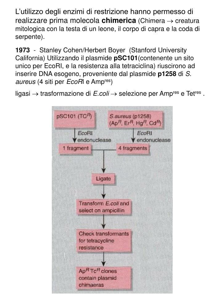 L'utilizzo degli enzimi di restrizione hanno permesso di realizzare prima molecola