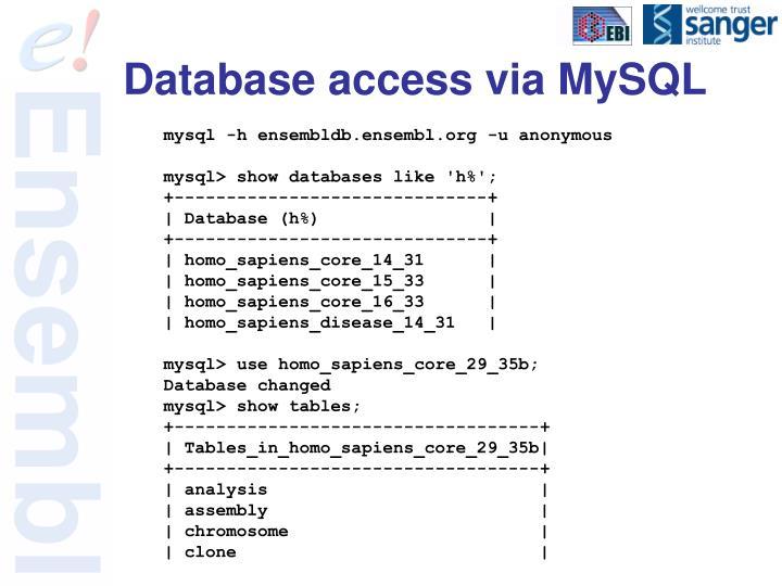 Database access via MySQL