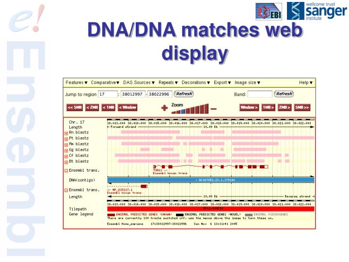 DNA/DNA matches web display