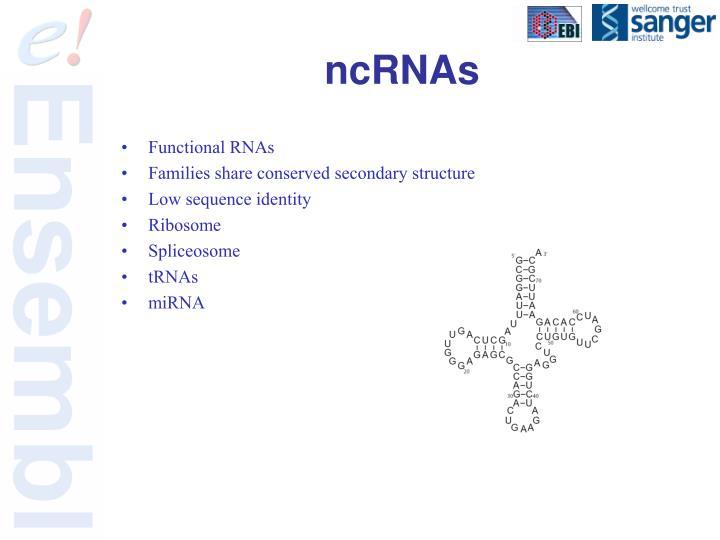 ncRNAs