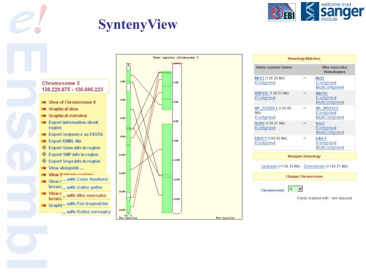 SyntenyView