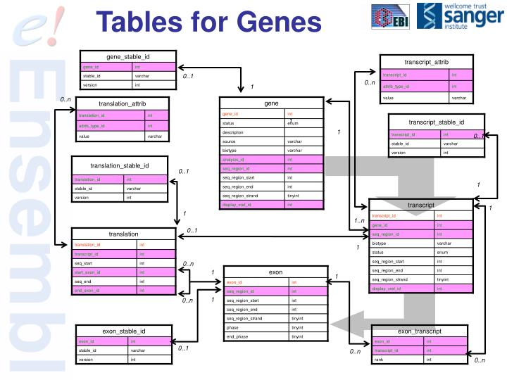 Tables for Genes