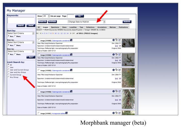 Morphbank manager (beta)