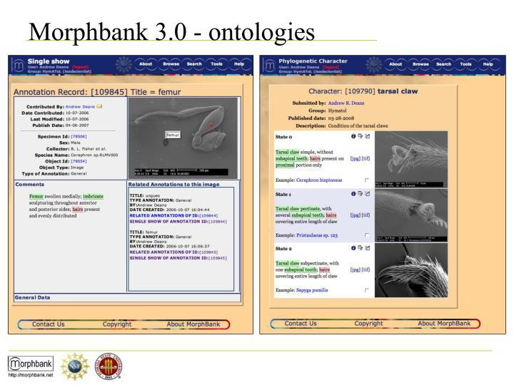 Morphbank 3.0 - ontologies