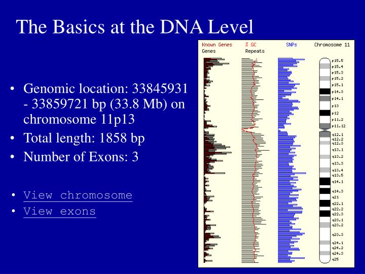 The Basics at the DNA Level