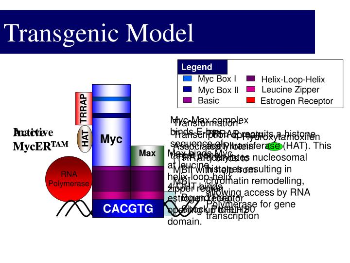 Transgenic Model