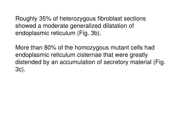 Roughly 35% of heterozygous fibroblast sections showed a moderate generalized dilatation of endoplasmic reticulum (Fig. 3b).