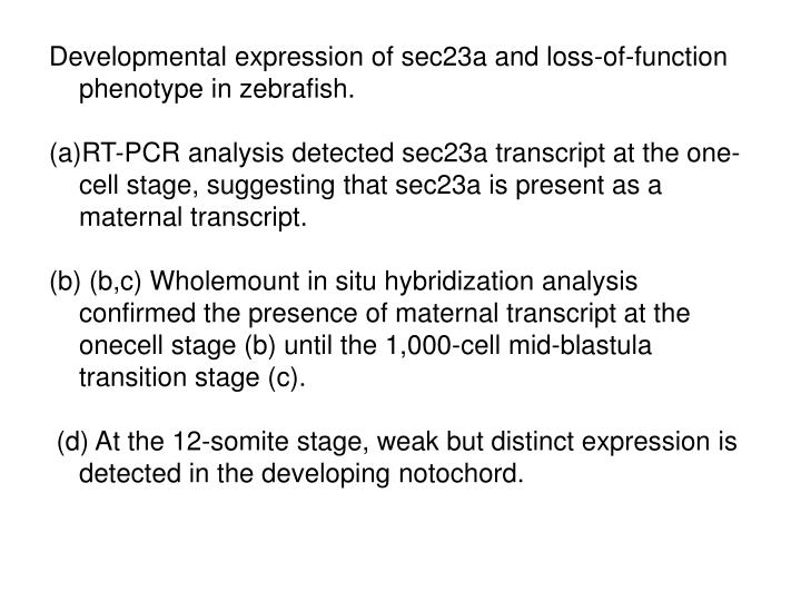 Developmental expression of sec23a and loss-of-function phenotype in zebrafish.