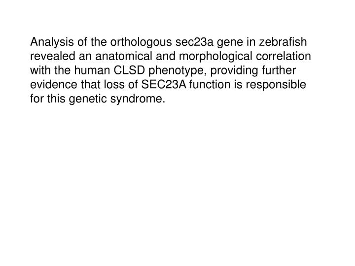 Analysis of the orthologous sec23a gene in zebrafish revealed an anatomical and morphological correlation with the human CLSD phenotype, providing further evidence that loss of SEC23A function is responsible for this genetic syndrome.